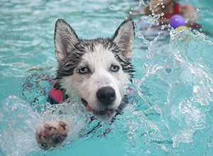 Q: Is it ok for my dog to swim in the pool, or drink the pool water?