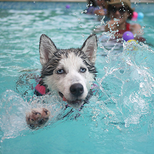sbspas_dog_swimming